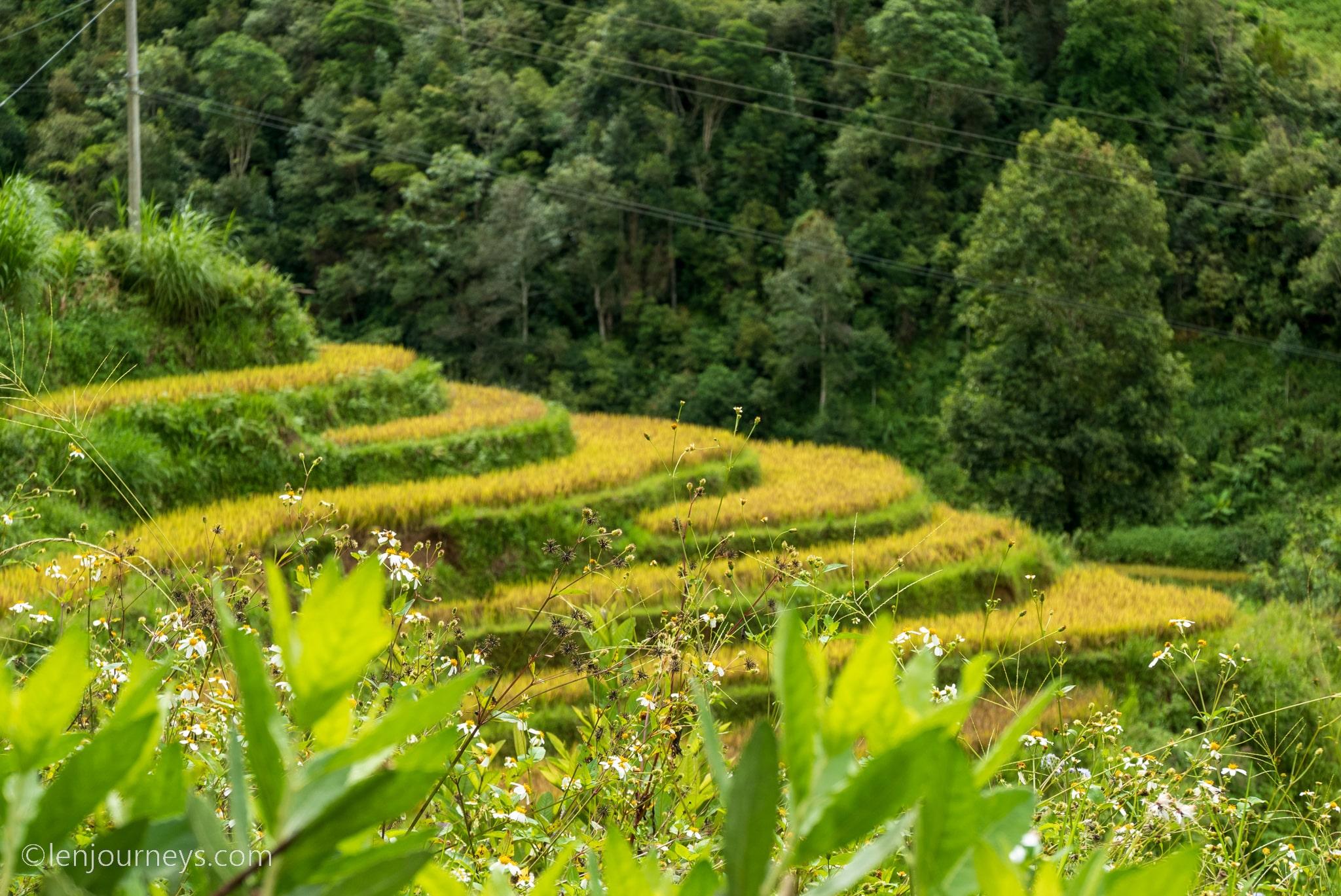 Autumn in Mu Cang Chai