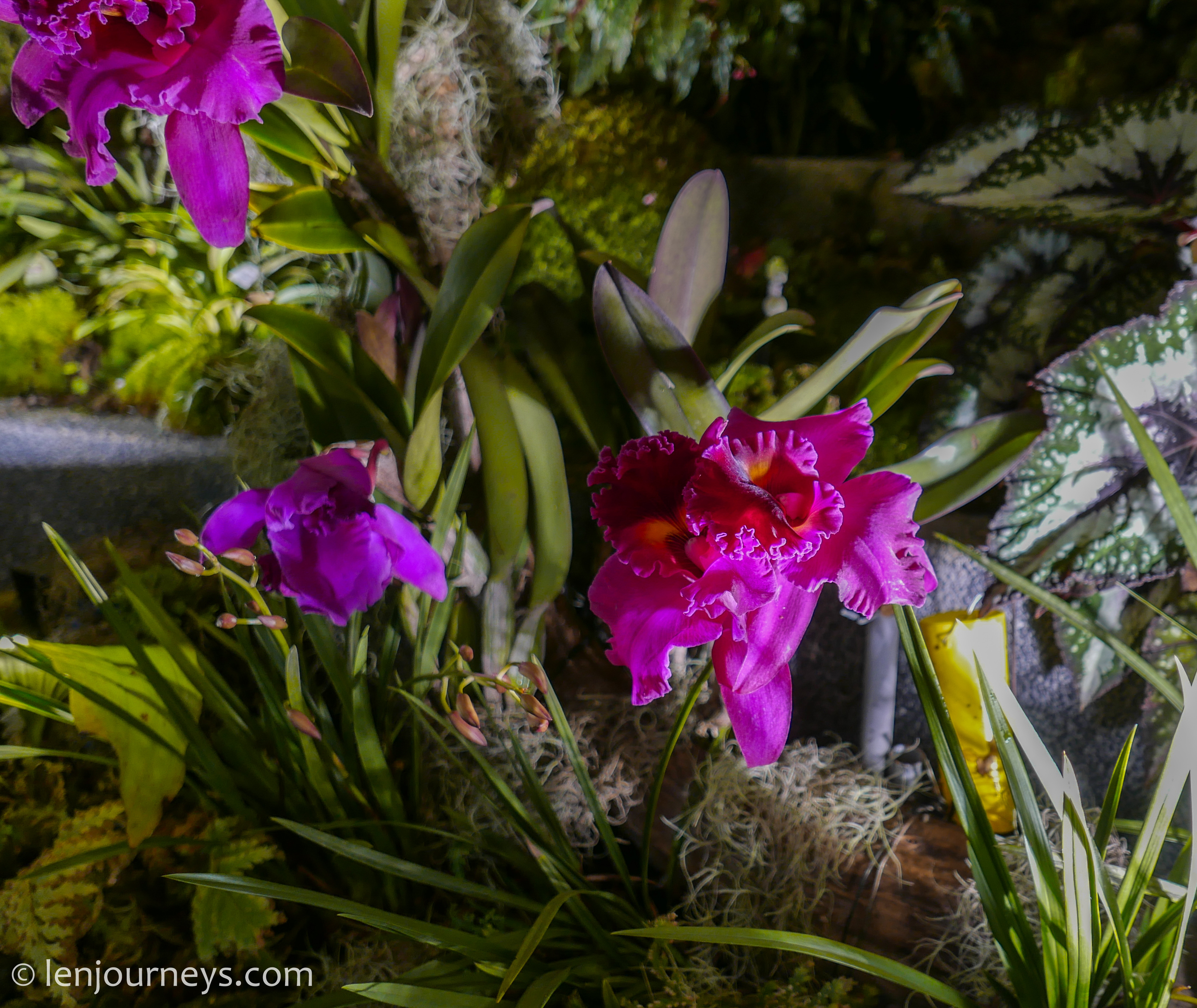 Nocturnal orchard at Floral Fantasy
