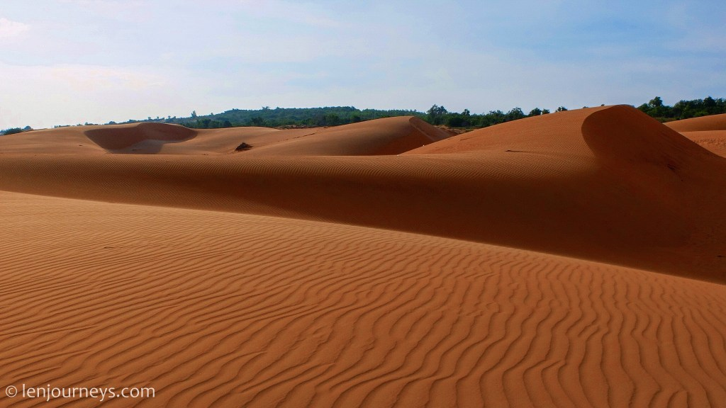 The amber coloured sand dune
