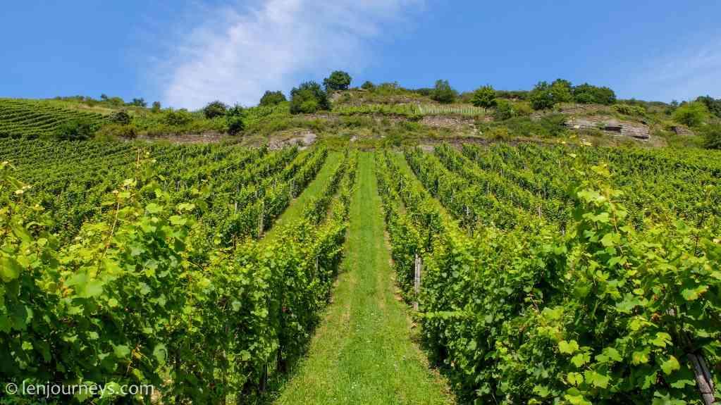Vineyards in Bacharach