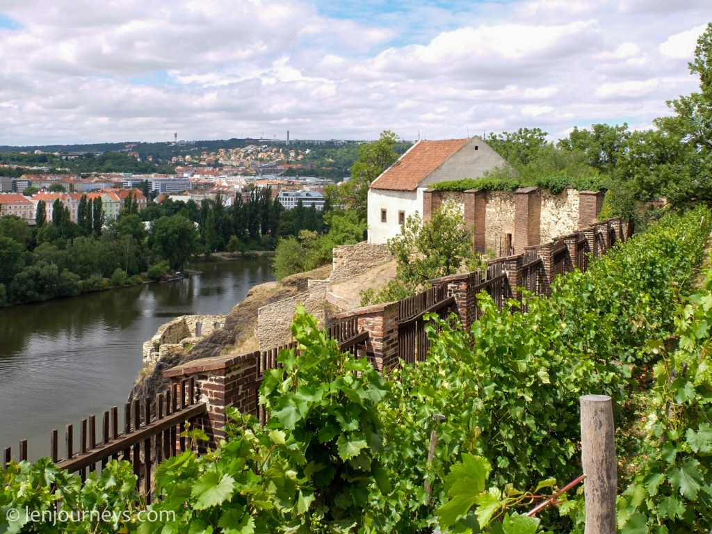Vineyards on Vysehrad Fortress